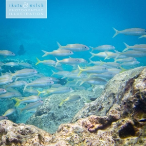 20130416_ocean_kapaa_fish_0004